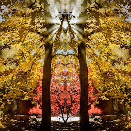 Autumn Rays by Brandon Montrone - Digital Art Places ( mirror, reflection, fractal, geometry, abstract, rays, mirrored reflections, creative, sacred, digital art )