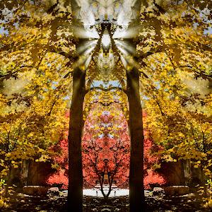 Autumn Rays2Mirror.jpg