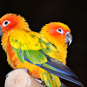 lover's quarrel by Banggi Cua - Animals Birds