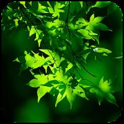 Green Wallpaper APK