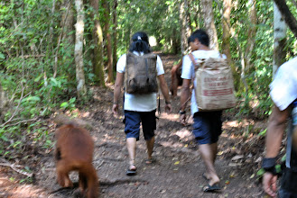 Photo: CAMP LEAKEY seguiamo i ranger scorati da qualche orango