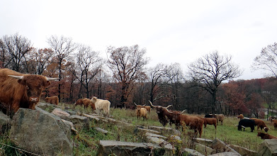 Photo: Hurricane Sandy grazing; not much left of Sandy but a calm steady drizzle...