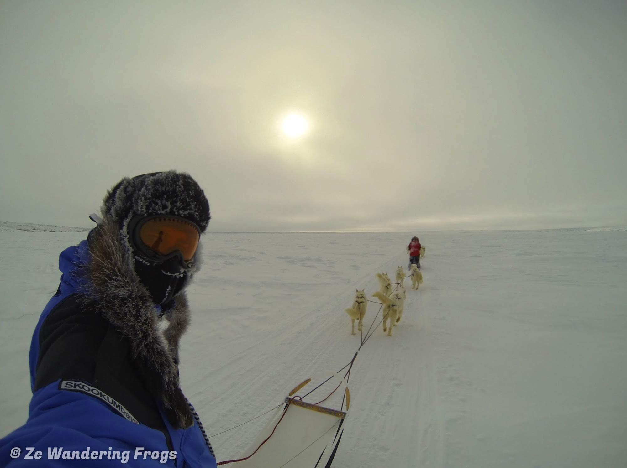 A Winter Adventure in the Arctic: Tundra Camping & Dog ...