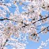 ViVi☆日本Online小舖