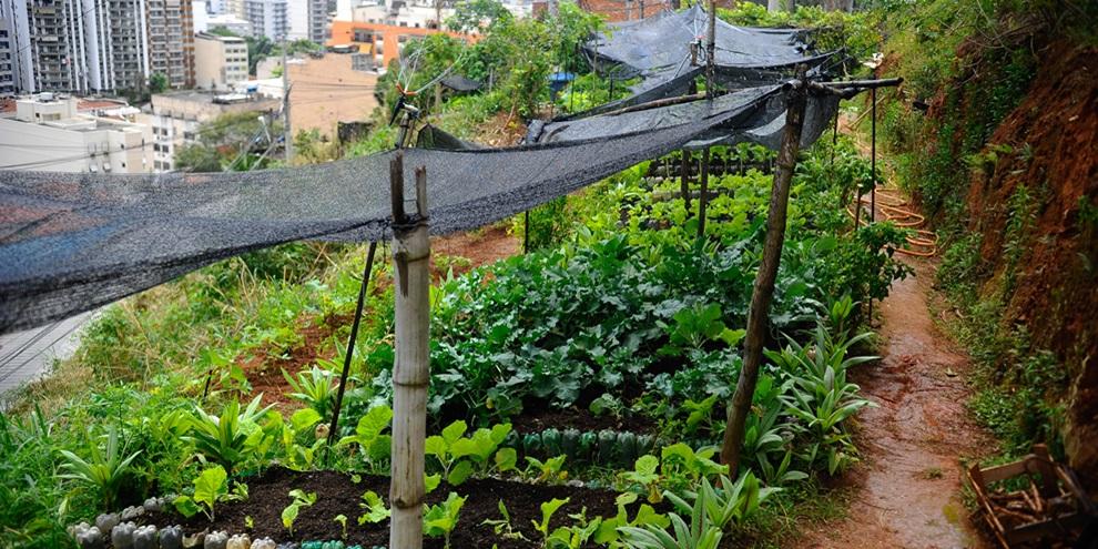 Agricultura Urbana (Fonte: Agro em Dia/Reprodução)