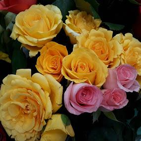 by Sukamal Biswas - Flowers Flower Arangements