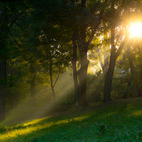 Rising by Bogdan Negoita - Nature Up Close Trees & Bushes ( forest, sunrise,  )