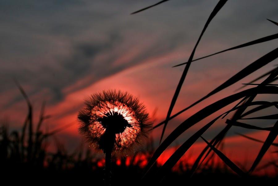 sunset by Tom Coppock - Novices Only Landscapes ( sunset, plants, weeds )