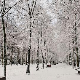 Illustration by J & M - City,  Street & Park  City Parks ( park, snow, illustration, image, view,  )