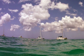 Photo: Ecotourism - it seems to have few if any negative impacts on the life below.  This site is one of the most most popular for ecotourism in Barbados, the glass bottom boats and catamarans and other vessels tying up to moorings in the area of a wreck (see diagram; slide 3). Hundreds of visitors snorkel the area each day during the peak tourist season. Other than throwing bread into the waters above the wreck to attract fish, I saw no obvious disturbance of the area by the ecotourism activities.  It's a good illustration of how even a small but healthy natural area can have substantial economic benefits.