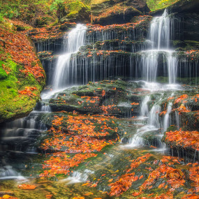 The Forgotten Falls by Aaron Campbell - Landscapes Caves & Formations ( canon, luzerne county, aaron glenn campbell, 550d, waterfall, 18-50mm f/2.8 dc ex macro, blur, glow, leaves, ricketts glen, tonemapping, eos, color efex pro, nature, autumn, sigma, foliage, 2012, motion, rebel, t2i, nik software, 18th, ganoga glen, fairmount township, ricketts glen state park, falls trail, kiss x4, hdr, thursday, pennsylvania, nepa, high dynamic range, photomatix pro, soft focus, fall, october, slow shutter )