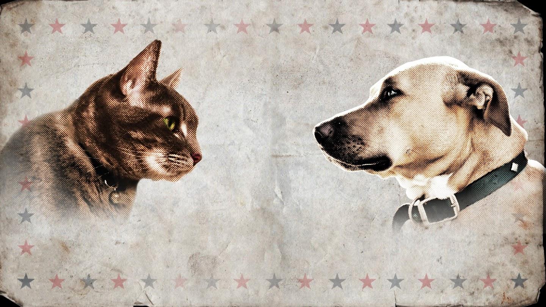 Watch Cat vs. Dog live