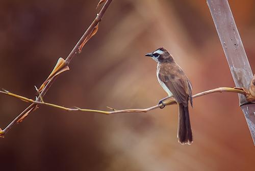Framed by Boyet Lizardo - Animals Birds ( bird photography, bird photos, bird shots, bird pictures, birds, tamron, canon, wildlife )