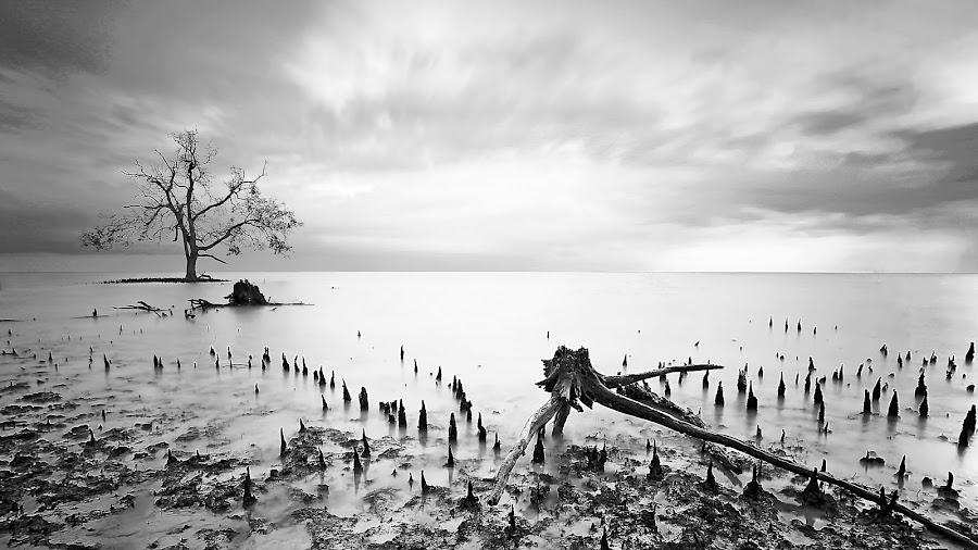 Survival by Zaid Zaza - Landscapes Waterscapes ( mud, tree, black and white, swam, mangrove, b and w, landscape, b&w, monotone, mono-tone )