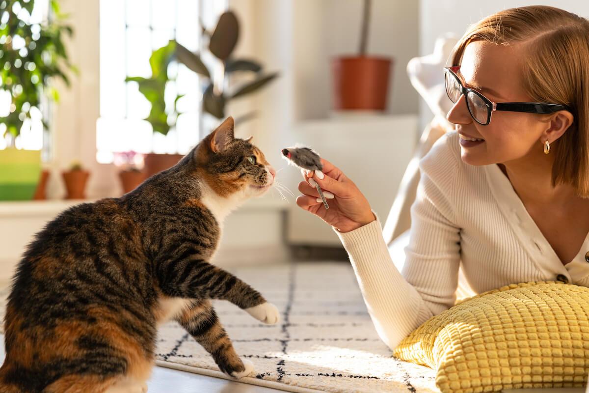 Jouez avec votre chat pour qu'il ne se sente pas délaissé