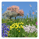 Spring Flowers Free Wallpaper icon