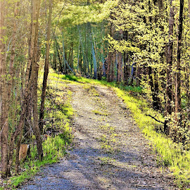 A Walk in the Woods by Linda    L Tatler - Nature Up Close Trees & Bushes ( forest, woods, forests, trees )
