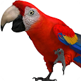Talking Parrot 2 apk