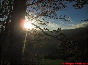 Photo: IMG_3963 il sole tra i rami dal 607