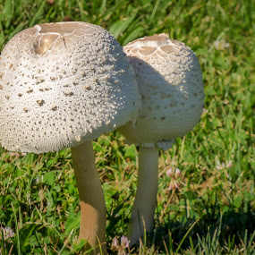 Afternoon Twining by Dale Fillmore - Nature Up Close Mushrooms & Fungi ( mushrooms, fungi, park yard, white on green, toadstools,  )