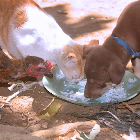 B'coz we all live on the same plate by Pelukis Badai - Animals Other (  )