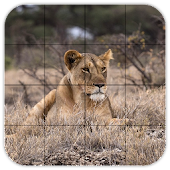 Tile Puzzles · Safari