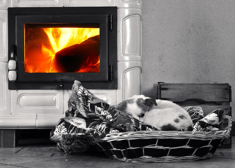 giuggi, 10 anni, meticcia, femmina, 20 ore di riposo al giorno, possibilmente vicino al fuoco. di kaos