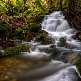 Rain Forest at Work by Don Guindon - Landscapes Forests ( stream, provincial park, spectacle lake, creek, moss )