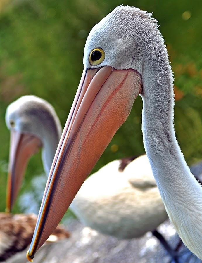 by Stefan Ho - Animals Birds