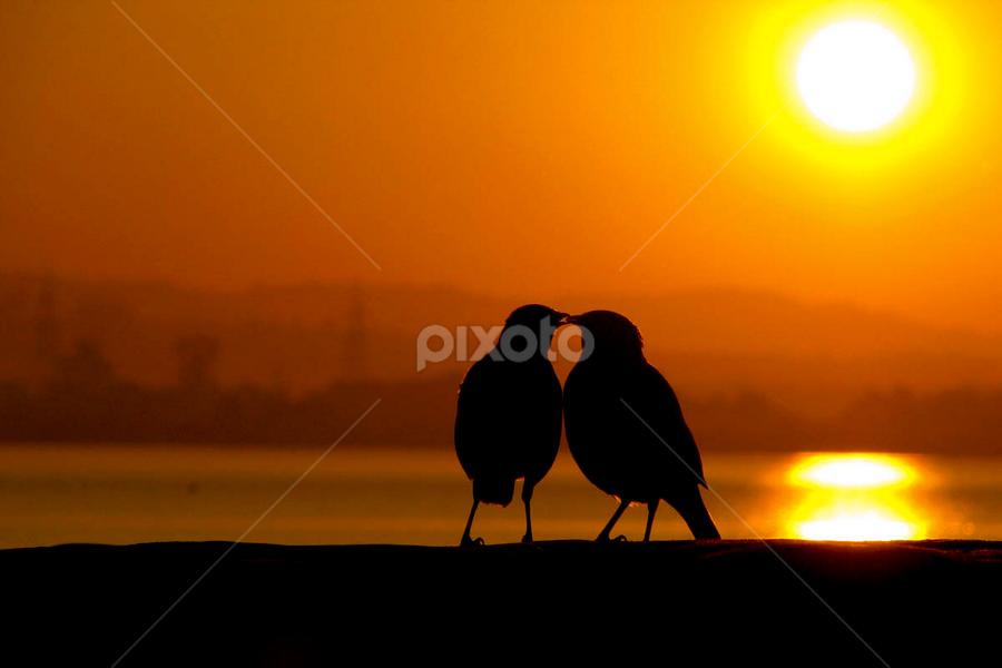 Morning Love by Anurag Bhateja - Abstract Fine Art ( dawn, lake, morning, birds )