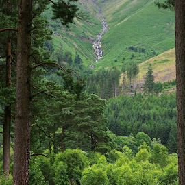 Through the Clearing by Ingrid Anderson-Riley - Landscapes Forests