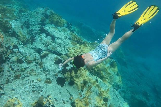 Công nghệ phục hồi rạn san hô mới nhằm đảo ngược thiệt hại do biến đổi khí hậu