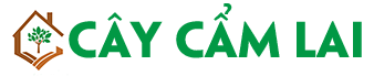 Cây Cẩm Lai