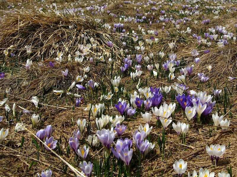 Primavera in fiore di donyb