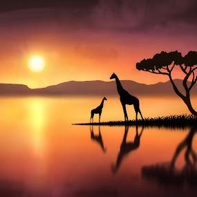 The Giraffes at Sunset by Jennifer Woodward - Digital Art Places ( animals, giraffe, sunset, silhouette, wildlife, sunrise, landscape )