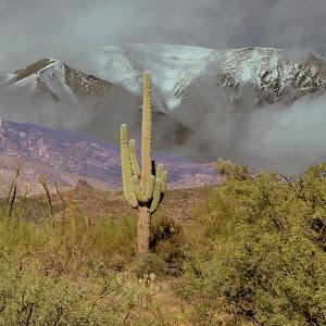 desert snow.jpg