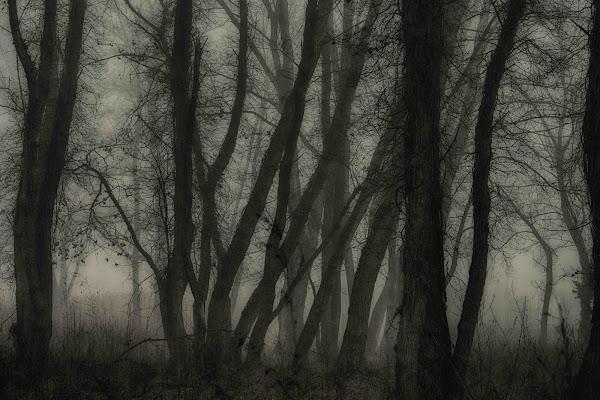 ...mi ritrovai per una selva oscura di antonioromei