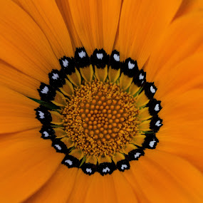 Sun by Eden Meyer - Flowers Single Flower ( heart, color, petals, flower,  )
