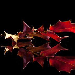 Taste of autumn by Sam Mirrado - Nature Up Close Leaves & Grasses ( orange, reflection, red, autumn, leaf )