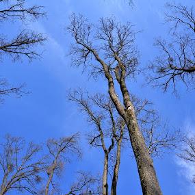 by Dragutin Vrbanec - Nature Up Close Trees & Bushes