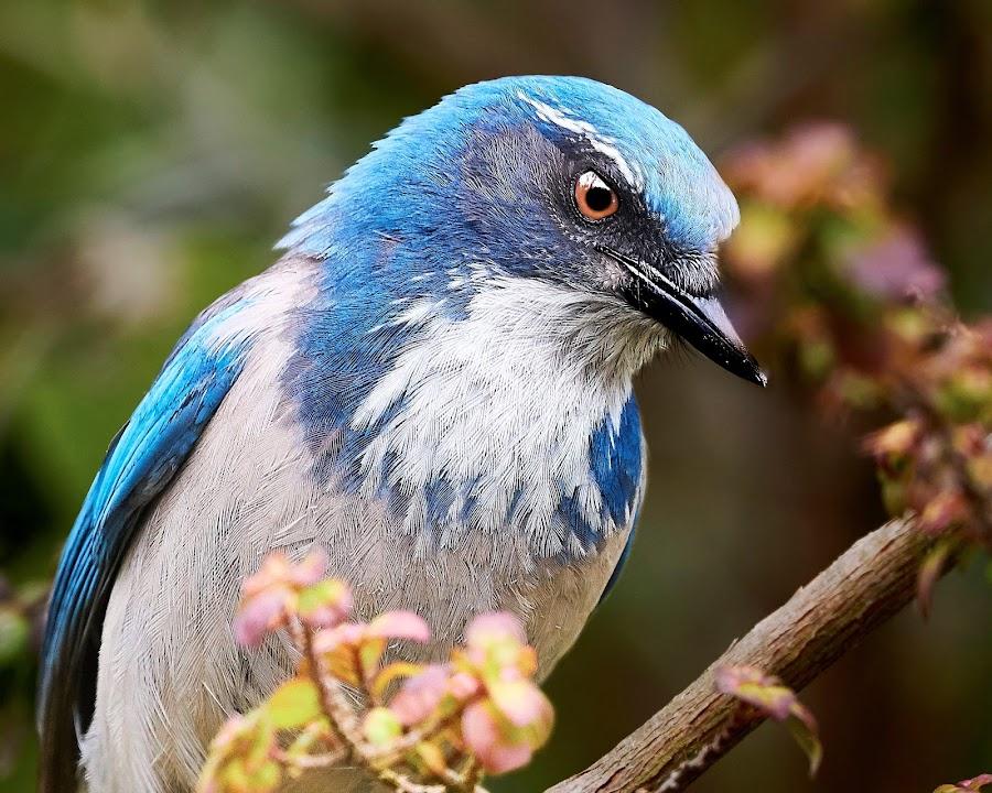 00 Corvid 9986~Q by Raphael RaCcoon - Animals Birds