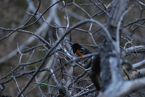 Hi bird.