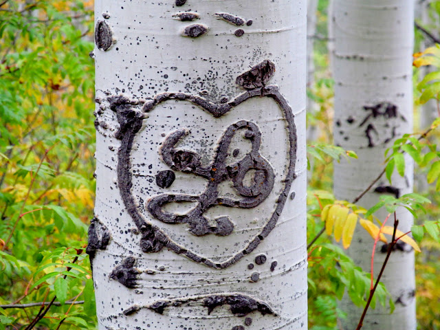 Heart carved into an aspen tree