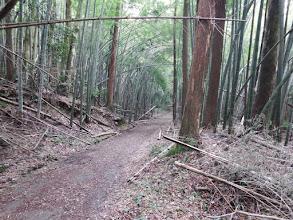 荒れた竹林を進む