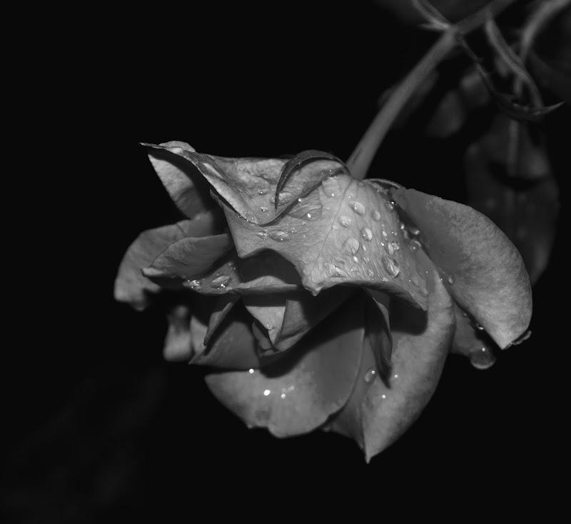 After the rain di daniele_figus