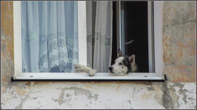 Photo: Privind de la fereastra dupa una-alta - pe Str. Lianelor, din Turda - 2018.09.18