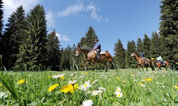 Photo: Reiterferien im Jura-- Tiere, Natur, Genuss.Foto: Karl-Heinz Hug