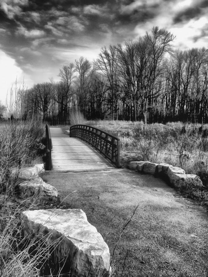 PATHS TO NATURE by Lino Chetcuti - Landscapes Prairies, Meadows & Fields ( pwcpaths )