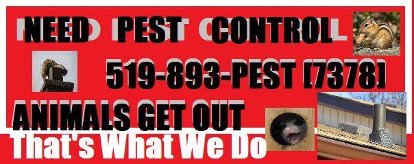 #NeedPestControl Call 519-893-PEST [7378] #AnimalsGetOut #WaterlooRegion.JPG