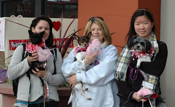 Photo: Cutest Dog Valentine winners